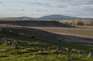Agrarians - The Phillips of Strathlea