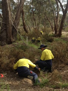 Green corps team managing threats in remnant bushland.